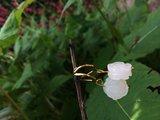 Oorbellen van bloemvormig morganiet op vergulde haakjes _
